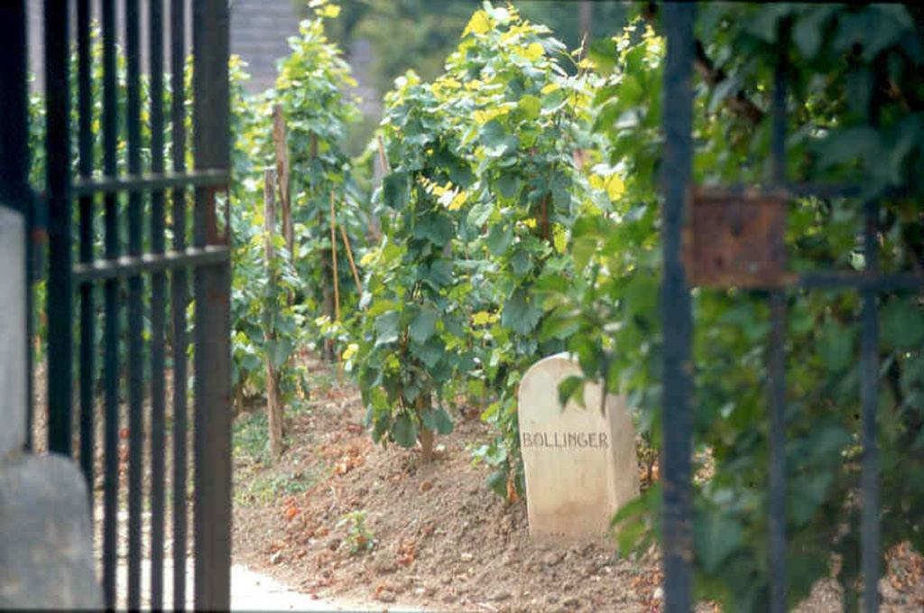 wijngaard van Bollinger