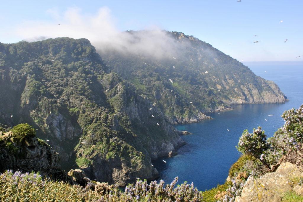 Gorgona eiland van bovenaf