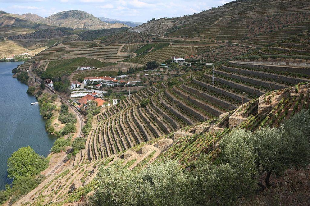 wijngaarden in de Douro-vallei terrasvorm