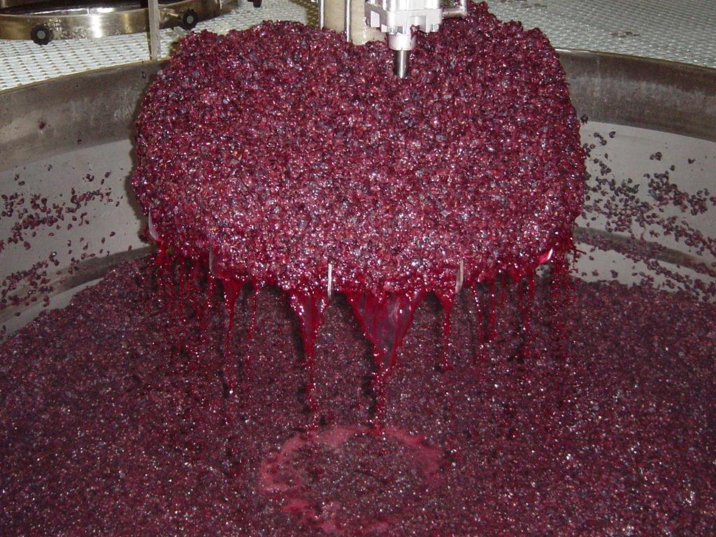 wijnmaken: een tank vol blauwe druiven