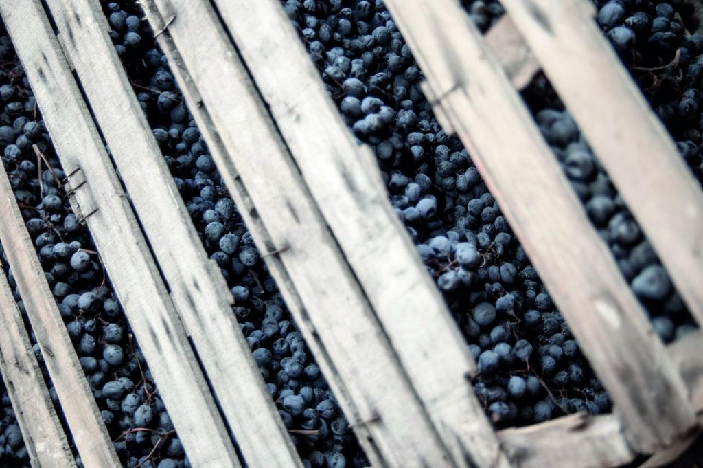 trosjes druiven drogen op houten rekken