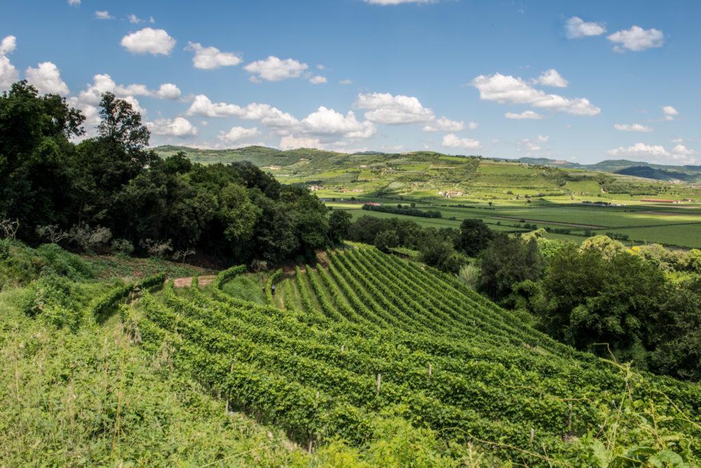 De groene wijngaarden van Valpolicella