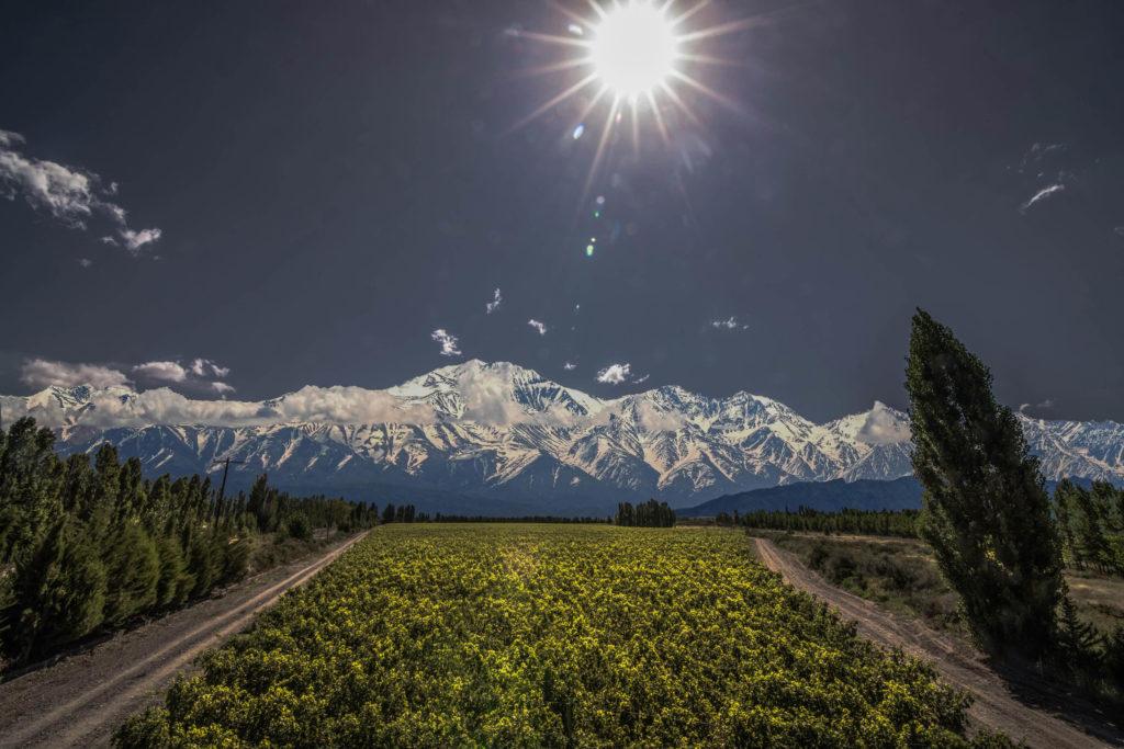 Malbec wijngaarden in Argentinië met de Andes