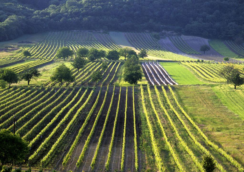 De wijngaarden van Steiermark