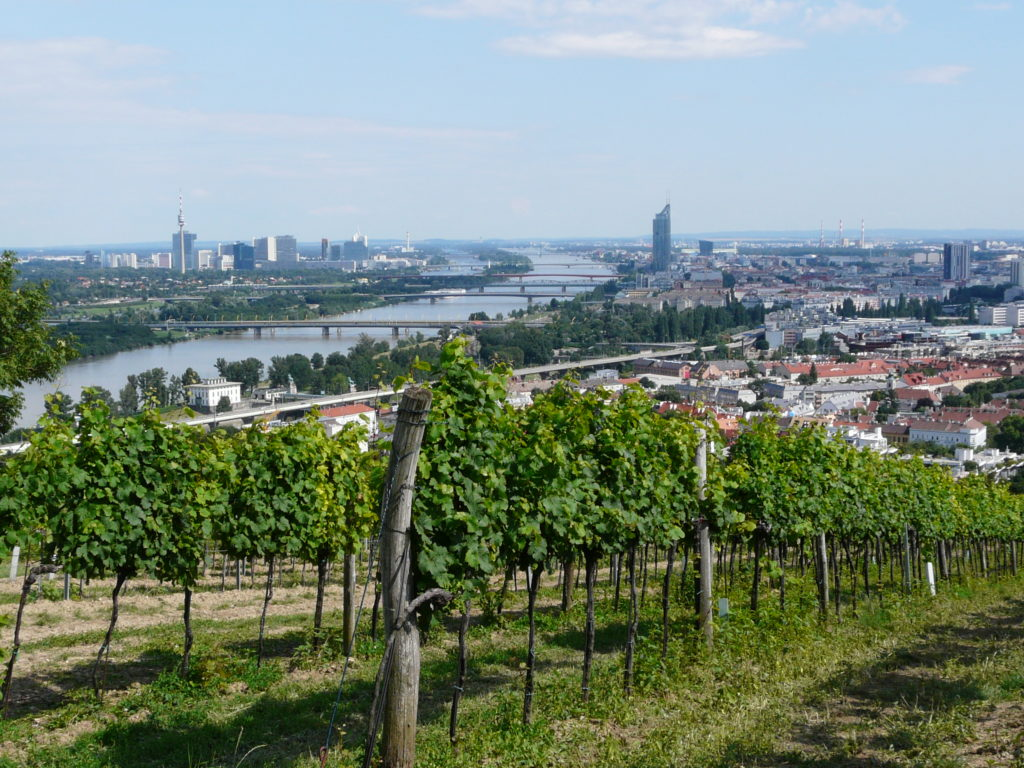 Oostenrijk heeft stadswijngaarden in Wenen