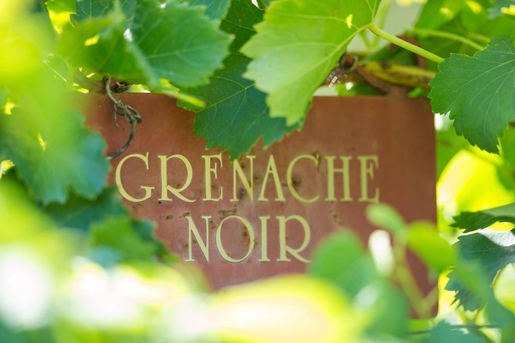 Grenache noir bord in de wijngaard van Châteauneuf-du-Pape