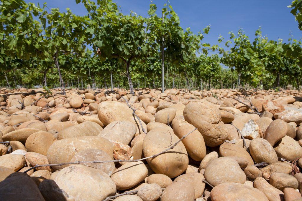 De wijngaard van Châteauneuf-du-Pape bedenkt met grote stenen